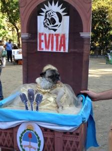 Evita Dog