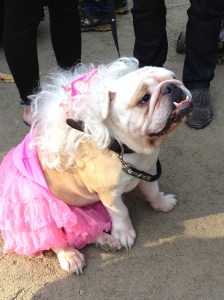 Drag Queen Dog