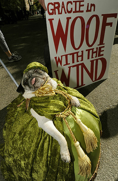 Gone With the Wind Dog